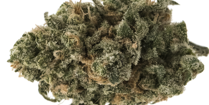 Find blue widow online today